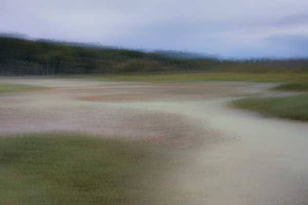 On Marshy Pond