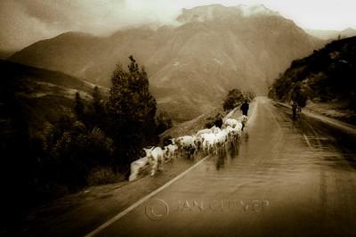 Herdsman, Peru