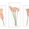 Merit - Calla lilies
