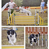 Photojournalism-A-3rd-Chris Christiansen-Dog Agility Trials