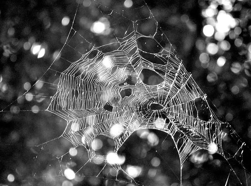 Abandoned cobweb