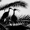 Ibis Sihouette