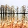 Landscapes-A-1st-Len Barnard-Lake Mattamuskeet