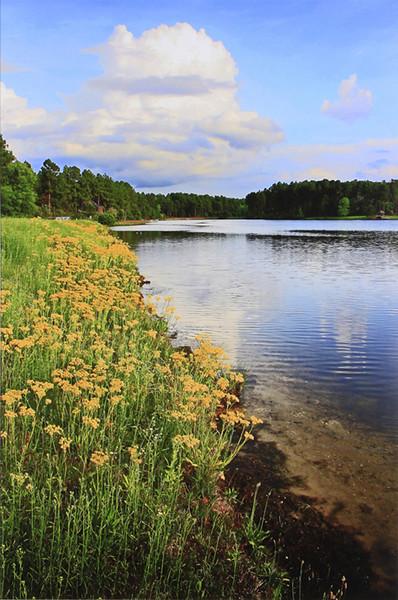 Landscapes-B-HM-Debra Regula-Golden Shore