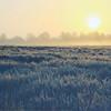 Landscapes-A-3rd-Brady Smith-Moore County Misty Morning