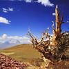 Landscapes-B-3rd-Tom Reedy-Ancient Sentinel
