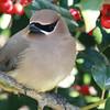 Magazine Photography-B-2nd-Debra Regula-Attracting Birds to Your Garden