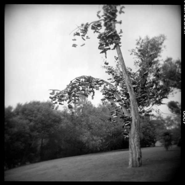 Honorable Mention + Donor's Award<br /> The shoe tree at Morley Field in Balboa Park before it fell. This dreamy pic was taken with the latest model Holga 120 roll film camera.