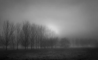 Mudgee mist