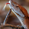 Macro-Class A-Donna Ford-Copperhead