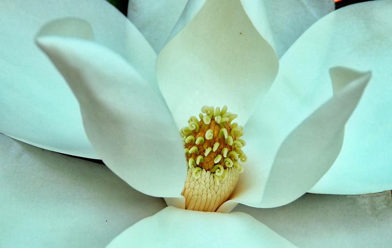 Macro-Class A-Len Barnard-Inner Beauty