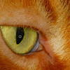 Macro-Class A-HM-Jim Davis-Cat's Eye
