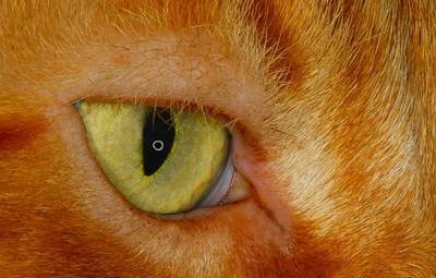 Macro-Class A-HM-Jim Davis-Cat's Eye