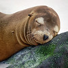 Parks-Class A-HM-Jill Margeson-A Serious Nap, Galapagos Island