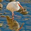 Open-Class A-Bill Matthews-White Ibis