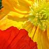 Open-Class A-Glenn Gilchrist-Brookgreen Gardens