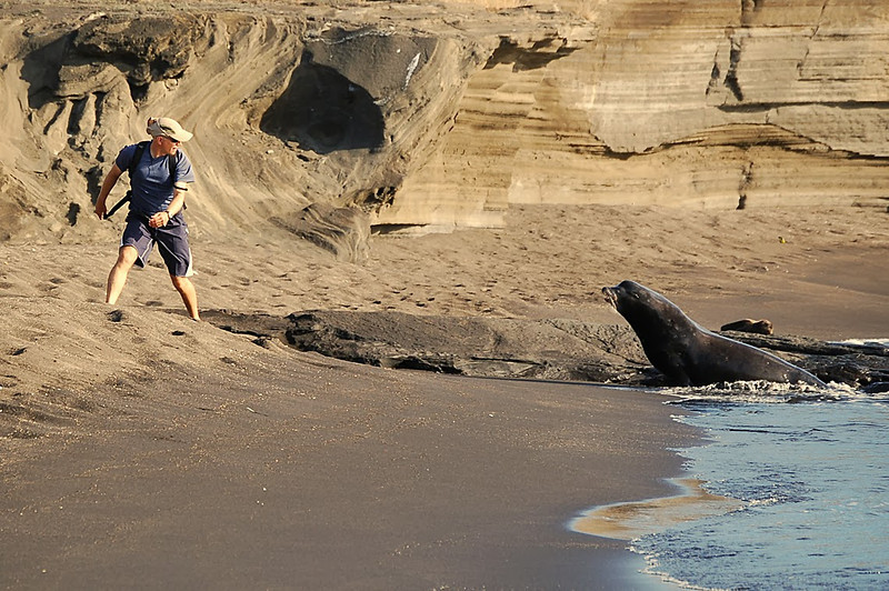 Stop Action-Class A-Jill Margeson-Charging Beachmaster Sea Lion