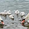 Wild Birds-John German-Lessons
