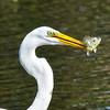Wild Birds-Len Barnard-Lucky Catch