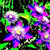Vegetation-Creative-Scott Duvall-Maine Beauties