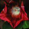 Vegetation-Creative-Lori Fischler-Creation
