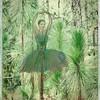 Vegetation-Creative-1st-Dave Verchick-Pine Forest Princess