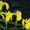 Vegetation-Optimized-1st-Marti Derleth-Nature's Contrasts