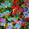 Vegetation-Creative-Gene Lentz-Radiant Color