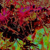 Vegetation-Creative-Grace Hill-Red Fern Reflections