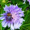 Vegetation-Optimized-2nd-Binky Albright-Am I Blue