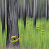 Vegetation-Creative-2nd-Jill Margeson-Walk in the Carnivorous Woods