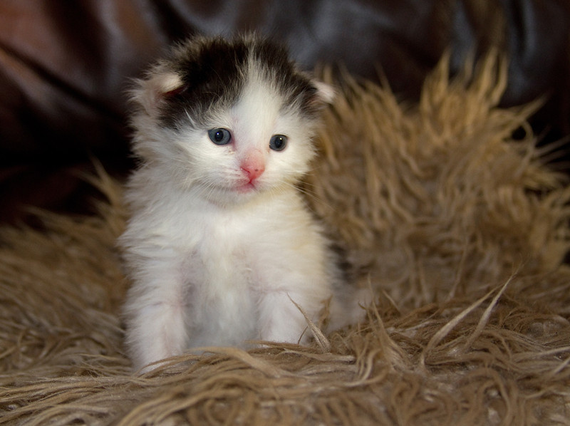 Annie Nash - Kitten 3