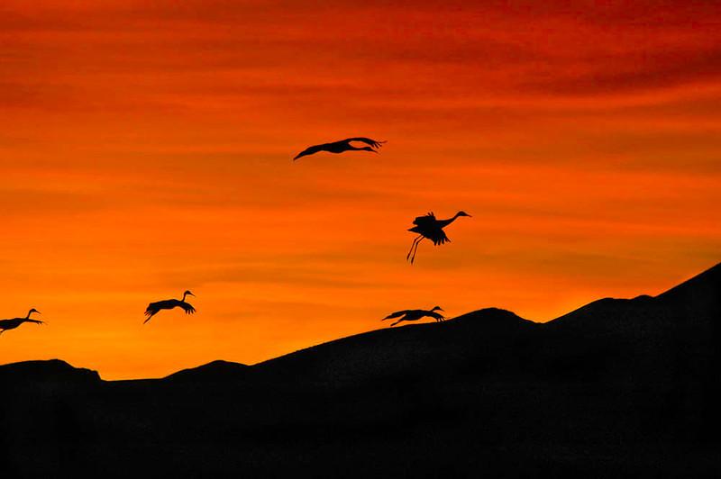 Ginger Smith – sunrise cranes