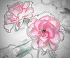 ROSE STUDY UNFINISHED