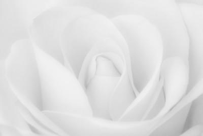 "Steve Harrison - ""Shades of White"""