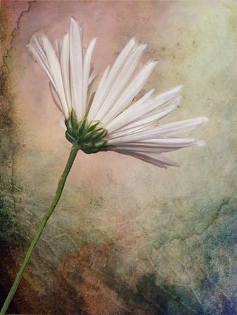 Steve Harrison - Delicate and rugged