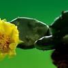 Nature - Class A - Brenda Hiscott - Wild Cactus