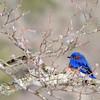 Nature - Class B - HM - Diane McCall - Winter Blue