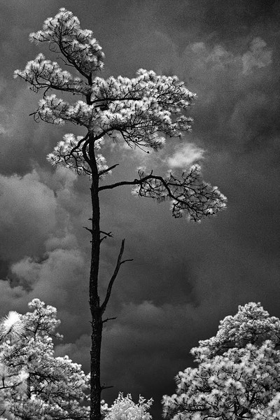 Nature - Class A - HM - Hunter Rudd - Against the Storm