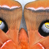 Nature - Class B - 3rd - Barbara Gault - The Eyes Have It