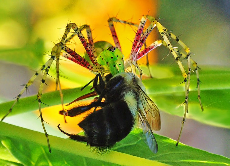 Nature - Class A - HM - Kathy Green - Bee On Time for Dinner