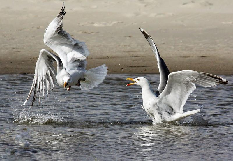 Nature - Class A - Debra Regula Fight Flight