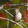Nature - Class A - Neva Scheve - Mockingbird