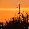 Still Life - Class A - Jim Davis - Sea Grass