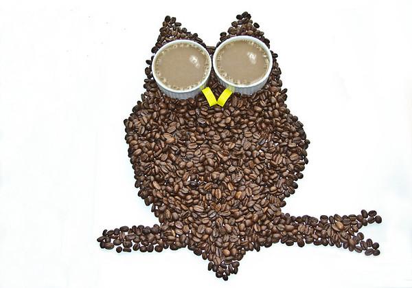annie nash beanie owl