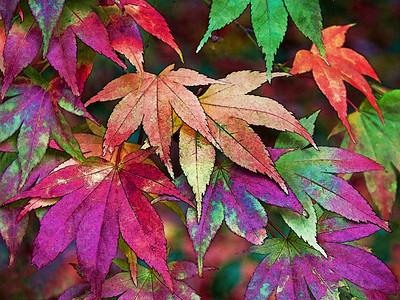 Ralph Autumn Leaves