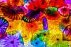 Enchanted Lilypads