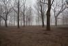 High Park Fog