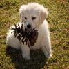Pets - Class A - Hiscott, Brenda - Pine Cones Keep Dropping