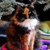 Pets - Class A - Green, Kathy - Beautiful Prissy Pumpkin